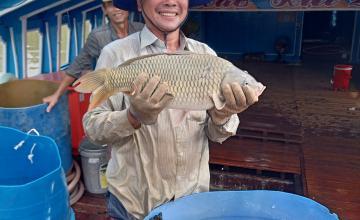 Khách hàng Newhope thu hoạch thu hoạch cá chép