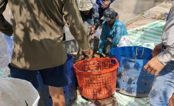 thu hoạch cá lóc cùng khách hàng Newhope